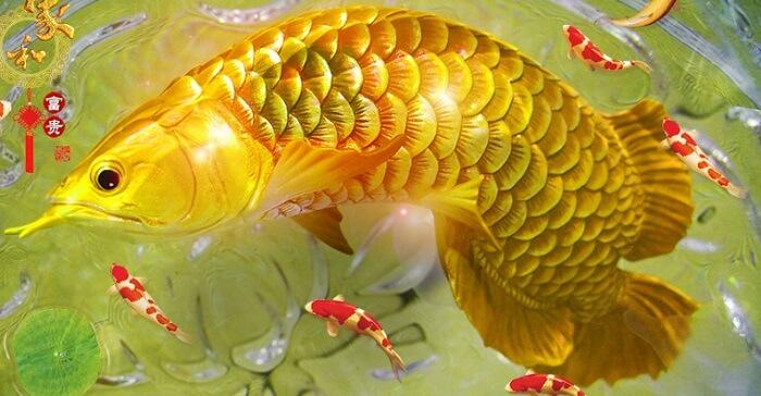 Mơ thấy đàn cá đang bơi